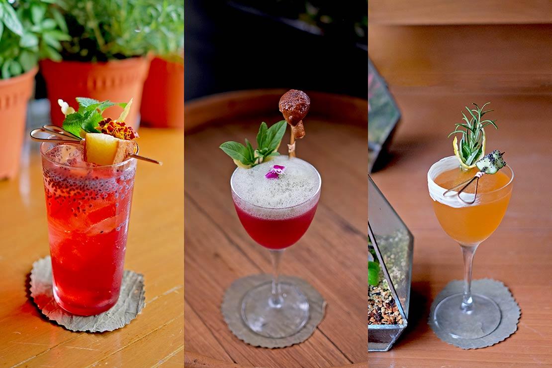 The Curious Gardener Cocktails