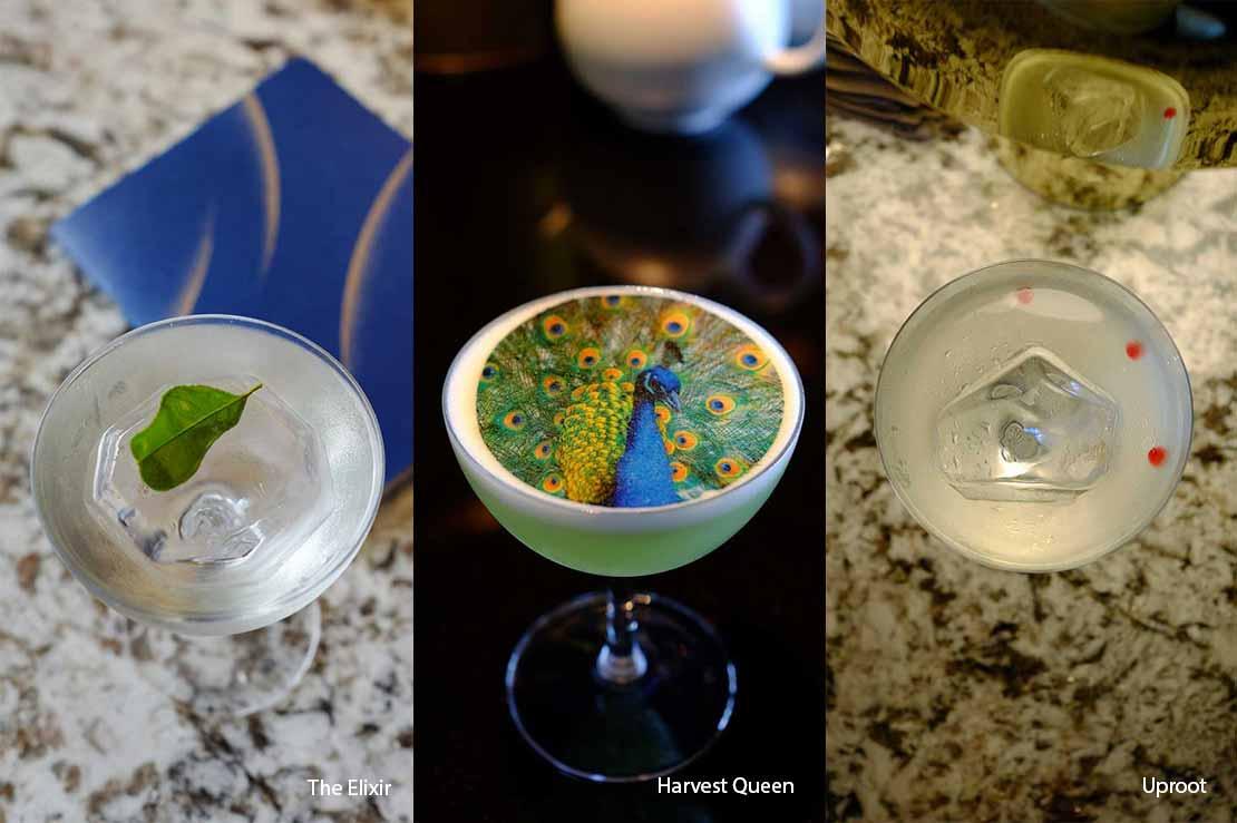 Nomadic Forager cocktails