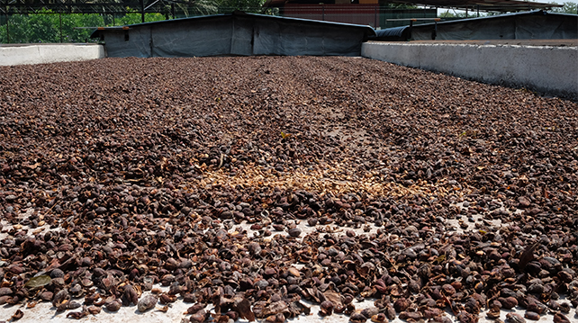 Coffee shells let out to ferment and dry