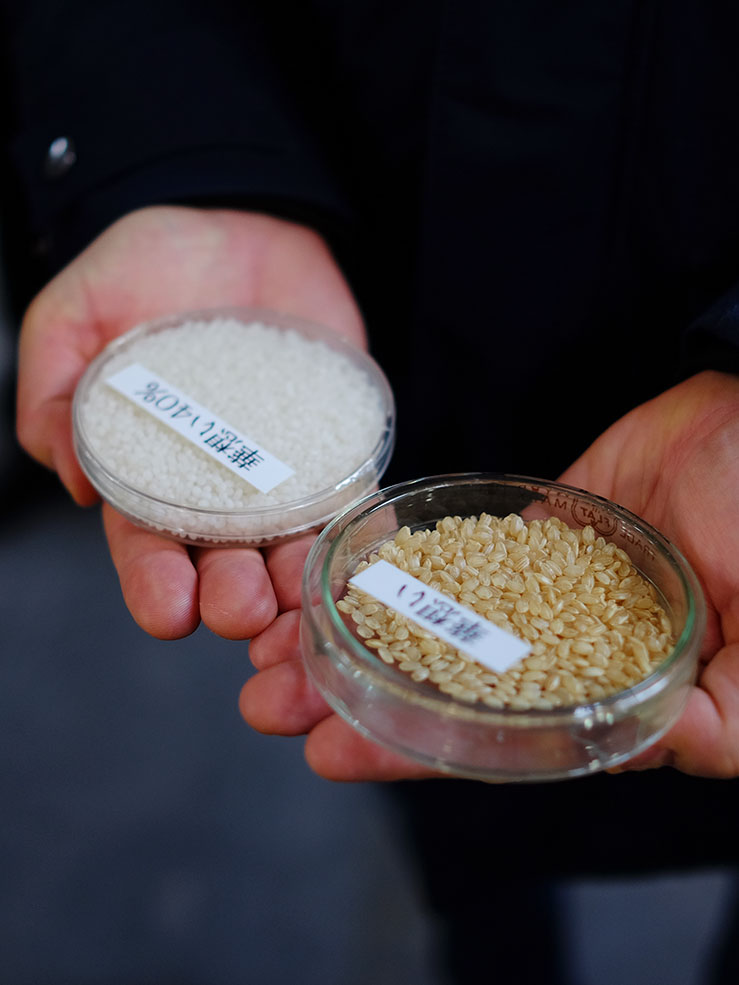 Sake rice before and after milling