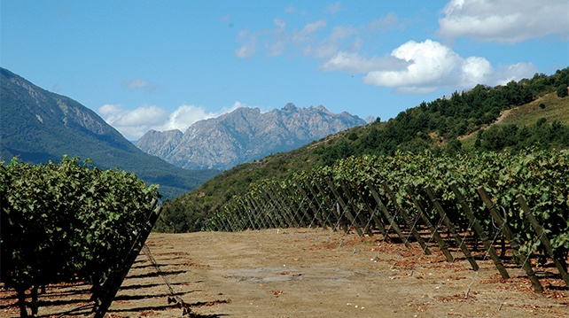 Andes Mountains Vineyards