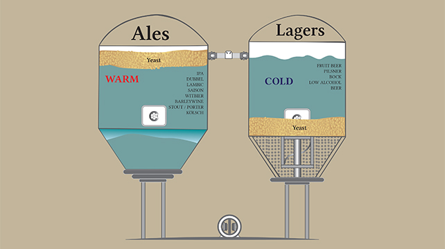 What you need to know about beer