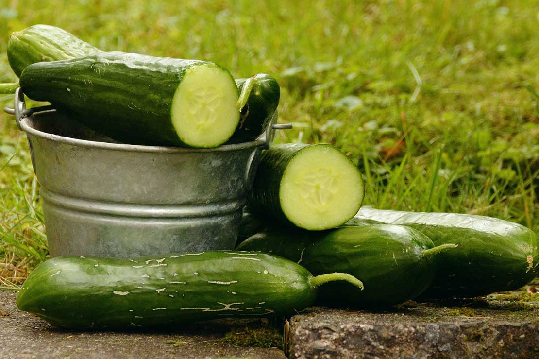 The things you didn't know about cucumber