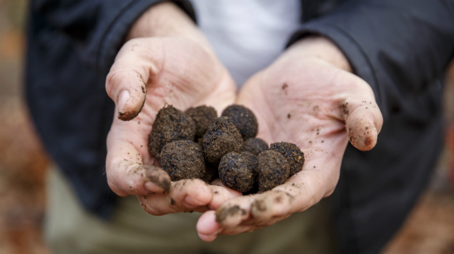 Western Australia's upcoming Truffle Kerfuffle is a must-visit for all gourmands